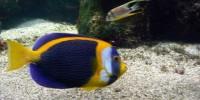 Visite à l'aquarium de La Rochelle